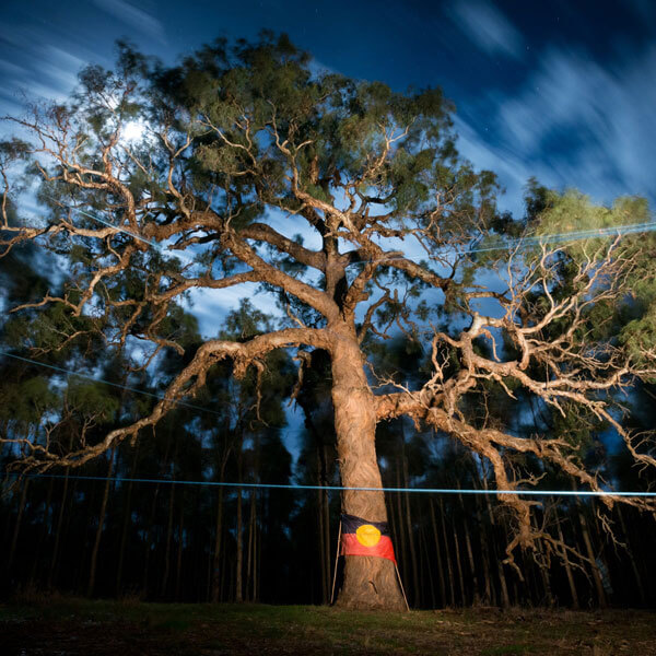 A sacred 800-year-old birthing tree
